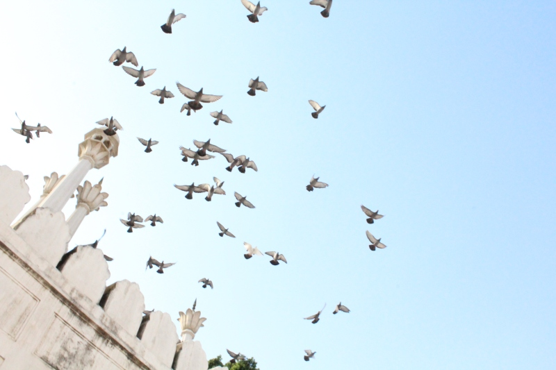 Pigeons fly over the mosque inside the Red Fort,Delhi